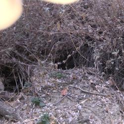Underbrush Caves4