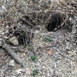Underbrush Caves3