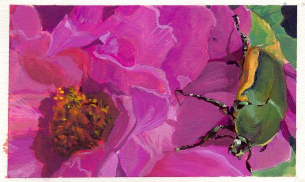 Beetle Flower horizontal warm bug